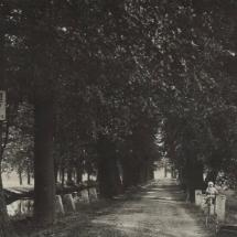 Bohdaneč - alej s cestou, polovina 20. století, inv. č. 20.701